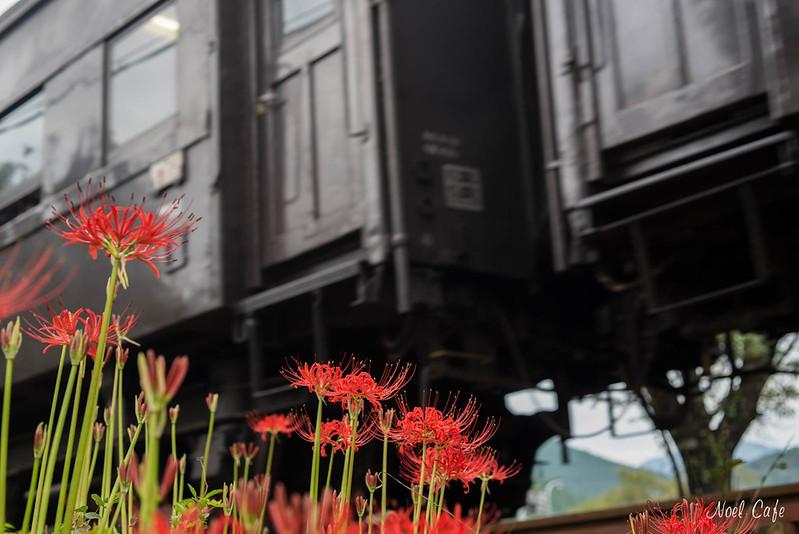 赤い足元 - red flowers at the feet by Noël Café