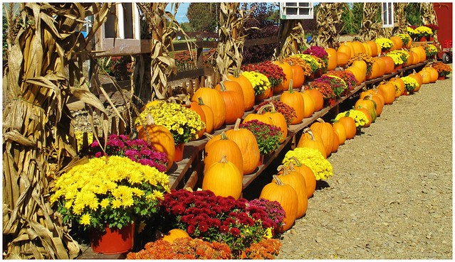 Port Farms Pumkin Patch @ Waterford, PA