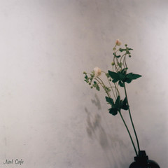 Japanese Anemone - 秋明菊 by Noël Café