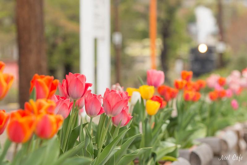 Tulip Days! by Noël Café