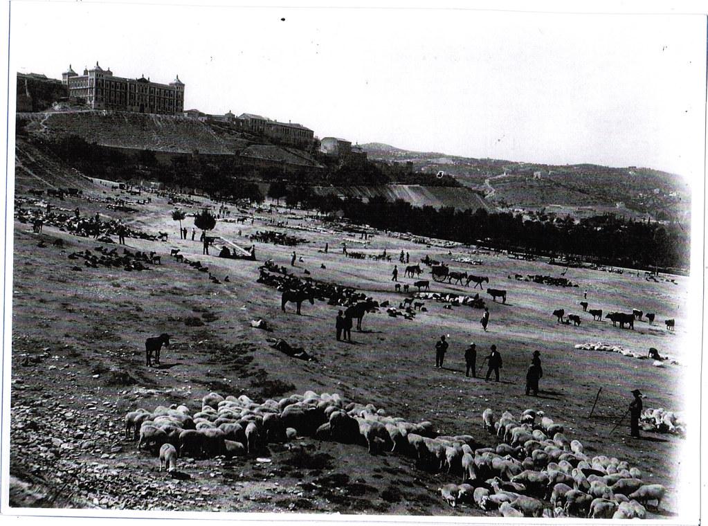 Rebaño de ovejas en la Vega Baja a comienzos del siglo XX. Foto Pedro Román