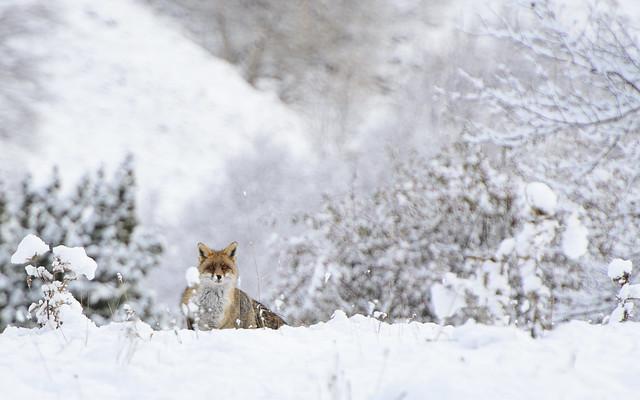 Atento en la nieve