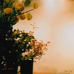 couleur d'automne - 秋色 by Noël Café