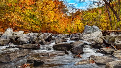 trees fall washingtondc nikon stream boulders d750 rockcreekpark insiteimage