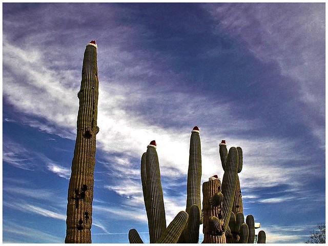 Santa Hats @ Tucson, Arizona