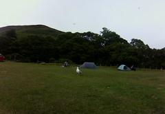 menacing seagull at Lochranza Camping