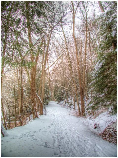 Winter along the Cowanshannock Trail