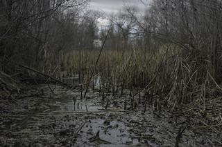 Crossing the dark woods