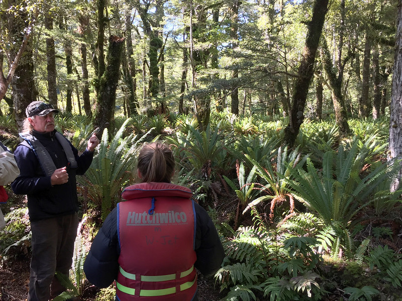 Fiordland Conservation and Predator control