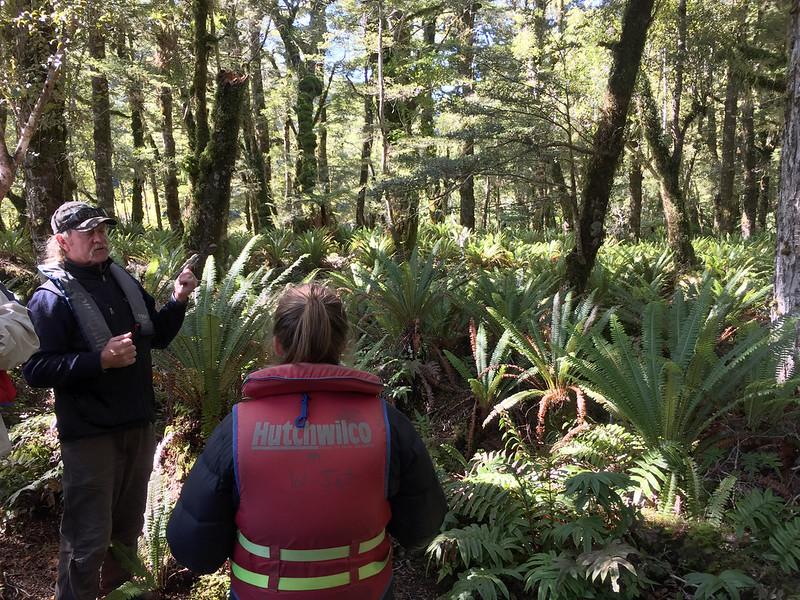 Fiordland Conservation and Predator control