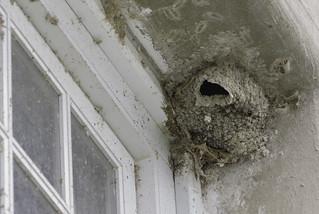 Bat nest