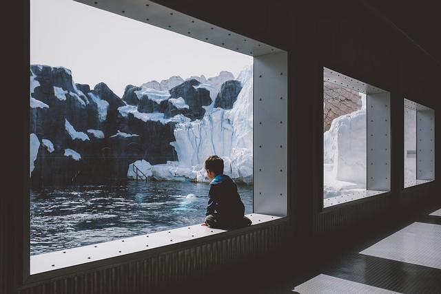 Arctic Windows