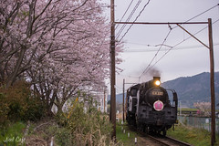 SAKURA TRAIN 2015 2 by Noël Café