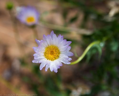Wildflower   by IntrepidXJ