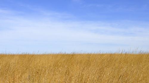 minnesota midwest grass bluesky hylandpark