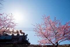 春到来 (Spring is Coming!) by Noël Café