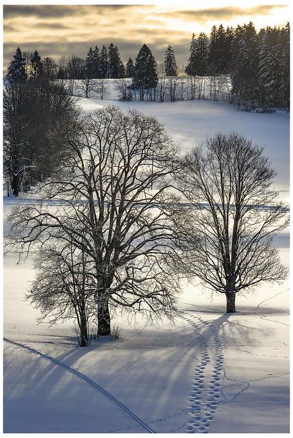 In a winter's day ... My Snow's rackets steps  Un jour d'hiver...Les traces de mes raquettes.  .La Chaux-de-Fonds. Canton of Neuchatel. Switzerland. No, 134.