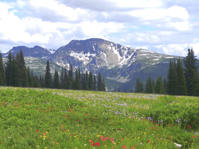 Trophy Mountain Meadows, Wells Gray Park BC