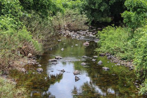 river india nature mumbai