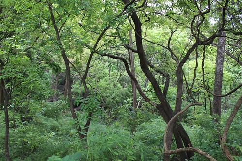 green nature mumbai india