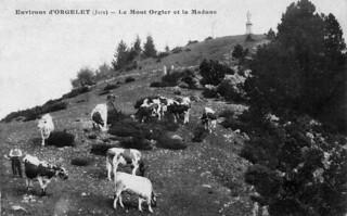 Troupeau sur le Mont Orgier