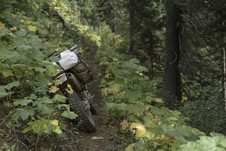 Simmons Creek trail