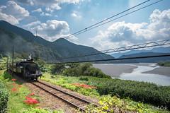 彼岸花と大井川と蒸気機関車と by Noël Café