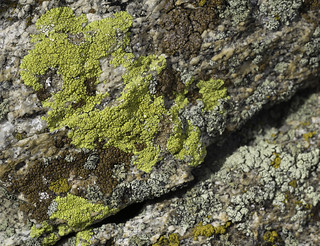 Safety lichen