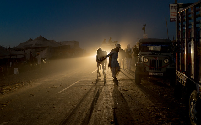 E - The horseman in the truck light . . . Pushkar-20151117-1809-DSC00008