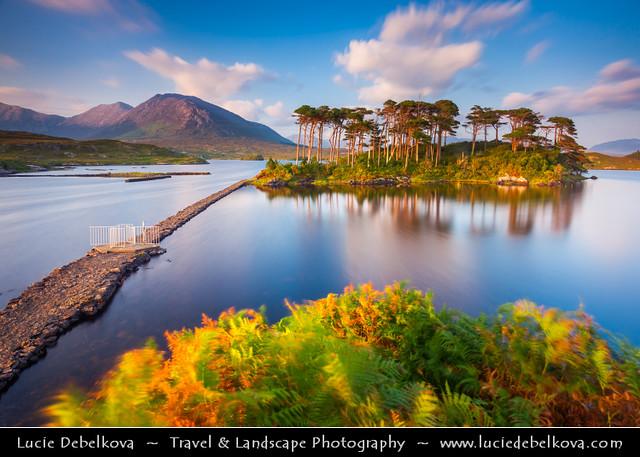Ireland - Connemara National Park - Pine island at Derryclare Lough