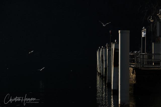 gulls over Lake Lucerne