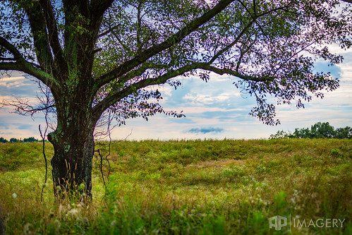 single mold moss daviess ky rural scene country tree horizon landscape sky farm algae kentucky green field usa