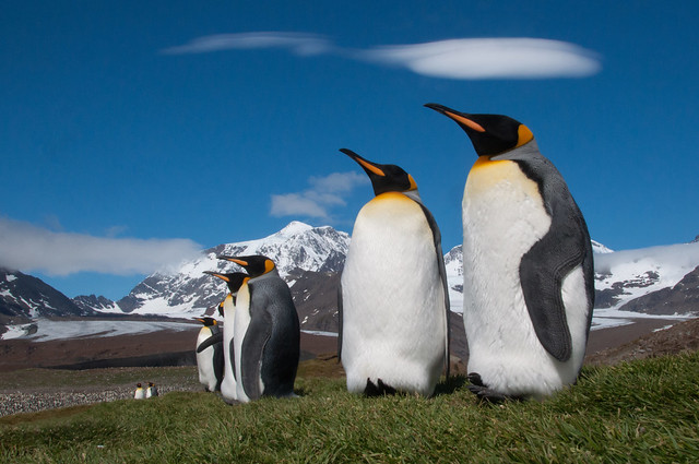 The hills are alive, with the sound of...penguins.