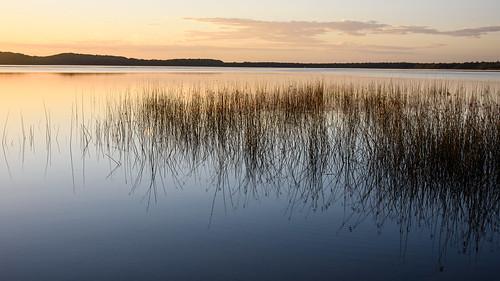 myalllakes afsnikkor24120mmf4gedvr calendar sunrise ingress mynikonlife australia 2016 nsw reeds country landscape landscapephotography newsouthwales jasonbruth mungobrush nikond810 sunrisessunsets d810 nikon reflection travels