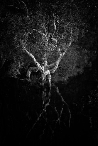 afsnikkor24120mmf4gedvr nikon ingress mynikonlife australia 2016 nsw myalllakes landscapephotography country paperbarktree tree subject landscape newsouthwales jasonbruth mungobrush nikond810 monochrome d810 blackandwhite reflection bombahpoint au travels