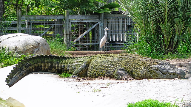 Gatorland, Orlando (441132)