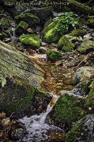 fern moss water stream creek waterfall waterfalls wigwamfalls yankeehorseridge virginia blueridgeparkway georgewashingtonjeffersonnationalforest nationalforest forest
