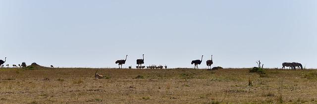 African Safari. All together!