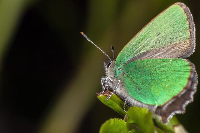 Fuzzy Emerald, pt. 1 - _TNY_8330