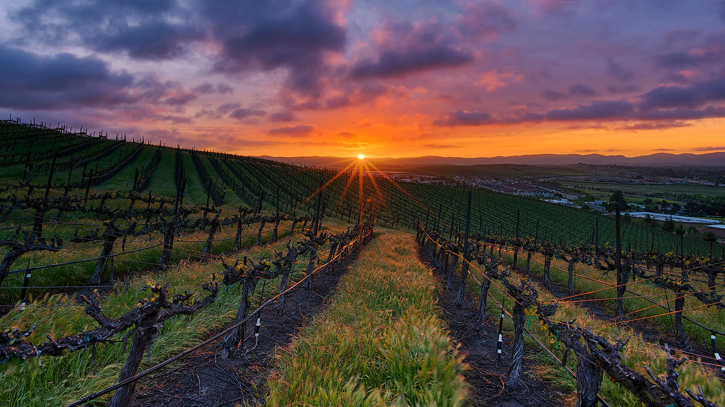 Vineyard Spring Sunrise