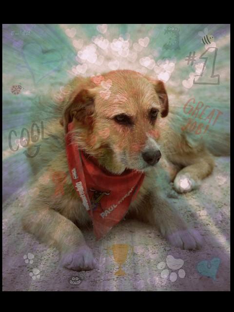Une vie de chien - AnarDog