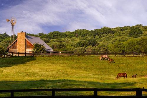 colt gpsfreinds pony tn tennessee usa unitedstates animal barn farm fence goldenhour horse land landscapephotography largemammal pasture scenic summer brentwood