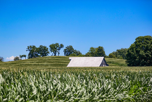 corn crops daviess land landscape hills sky farm rural kentucky county barn