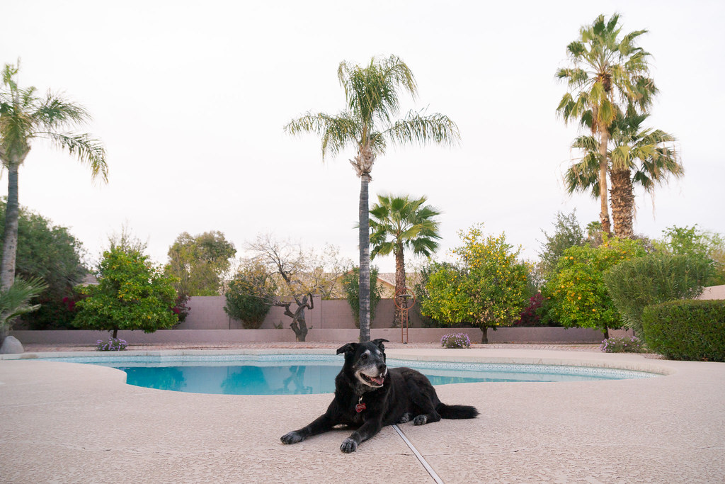 Our dog Ellie relaxes in the backyard in front of the swimming pool on the day we arrived at our rental house in Scottsdale, Arizona in March 2018