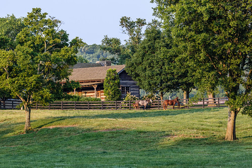 colt pony tn tennessee usa unitedstates animal farm fence horse land landscapephotography largemammal pasture scenic summer williamsoncounty