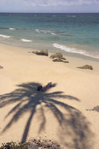 marley beach southlands bermuda palm tree shade shadow sunbathing art photo jonathan charles topf25