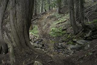Cedar spring