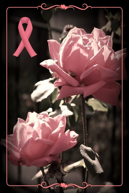 Pink Roses ~ Breast Cancer Awareness Month 2008