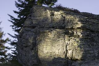 Late afternoon lichen