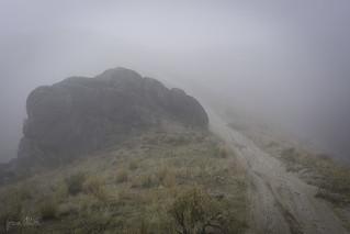 Lurking in the mist